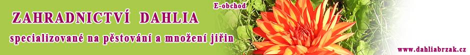 Zahradnictví Dahlia Brzák - specializované na pěstování a množení jiřin